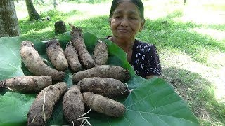 Healthy Village Food ❤ Cooking Taro Root Curry in my Village by my Mom