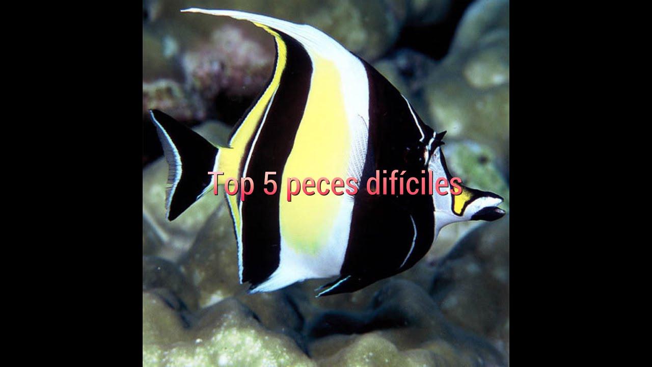 Top 5 peces dificiles para un acuario marino youtube for Peces marinos para acuarios pequenos