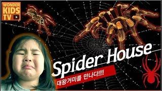 거미 박물관 l 대왕거미의 공격! 왕거미와 독거미를 만나다. 곤충놀이. 곤충박물관을 탐험하라! spider house