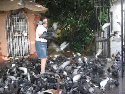 Travel San Juan, Puerto Rico: Crazy pigeons swarming tourists