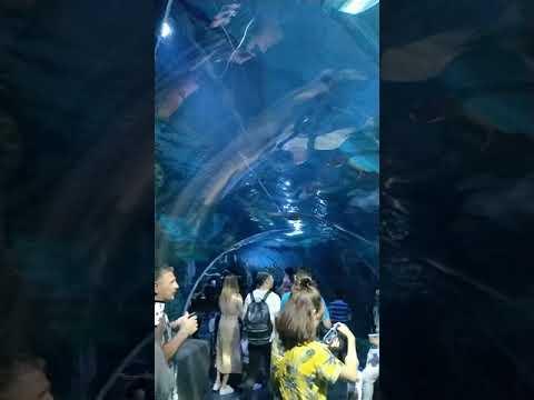 Bangkok - Sea world aquarium