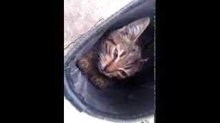 Кот в сапоГЕ :)