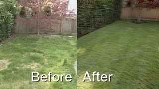 《幸福有家》一天之内!让草坪变绿!