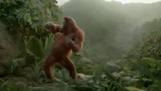 Ой мама не женюсь - не женюсь, танец холостяка обезьяны