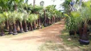 ในสวน1