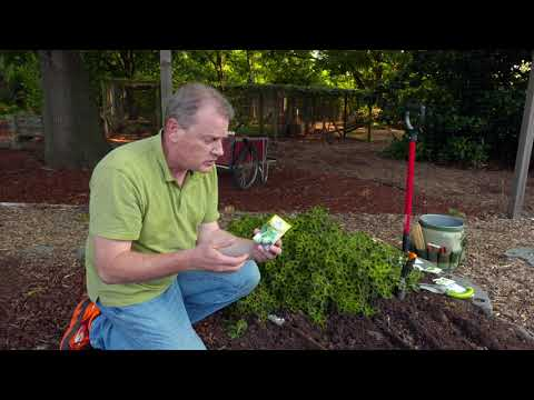 sowing-seed-for-a-fall-vegetable-garden