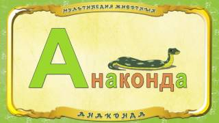 Анаконда