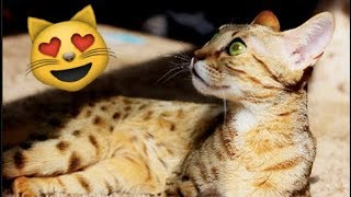 WOW COOL! LOOK at These CATS! Exotic Pets