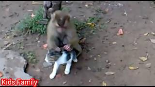 Monkey is Removing Cat lice