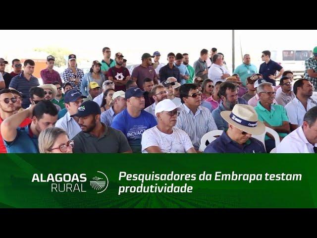 Pesquisadores da Embrapa testam produtividade do cultivo do trigo em área experimental