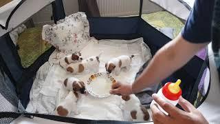 Доли перестала кормить щенков