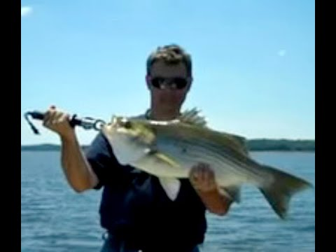 Biggest catch june 8 2012 pro hybrid striped bass fishing for Fishing report truman lake