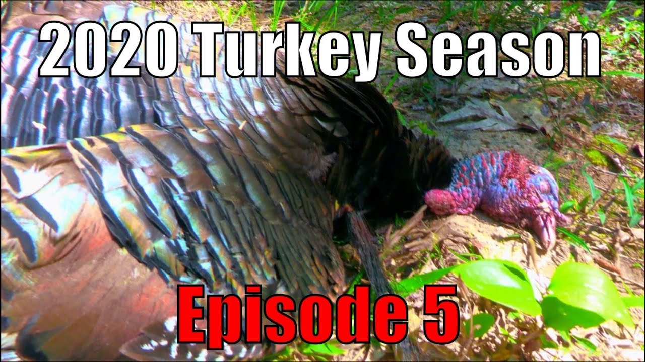 Longbeard Down! Mid-Day Turkey Hunting Grind Pays Off. 2020 Turkey Season Ep. 5