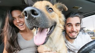 VAN LIFE WITH A DOG // day in the life vlog