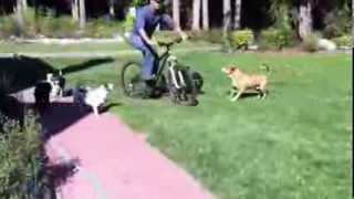 Dog Attacks Bike Pt. 1