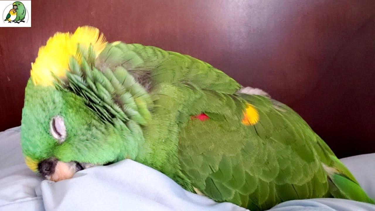 Did I Almost Kill My Bird? | Emergency Vet Visit