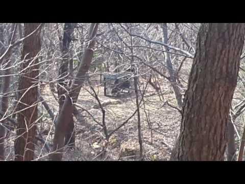 백양산 멧돼지 포획장면