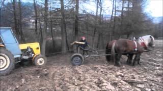Konie zimnokrwiste pracują / Horse pulling