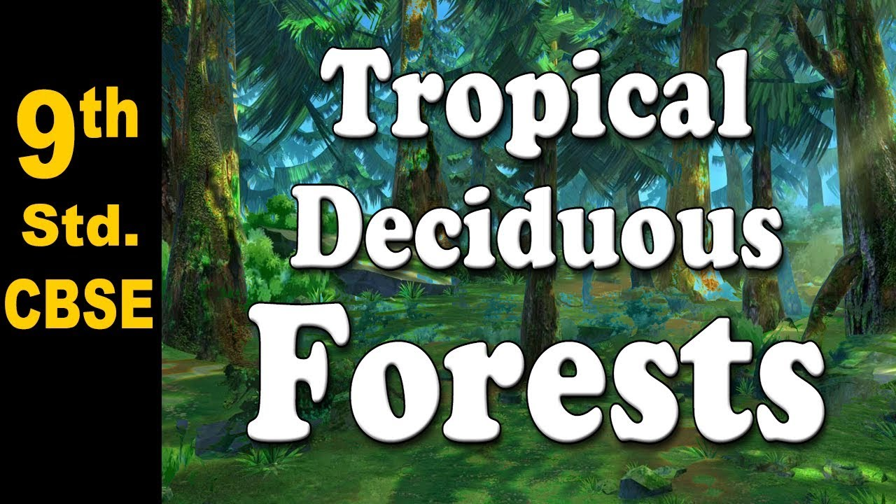 Limbing up the trees may seem like a good idea at the time, but it may introduce problems. Tropical Deciduous Forests 9th Std Geography Cbse Board Home Revise Youtube