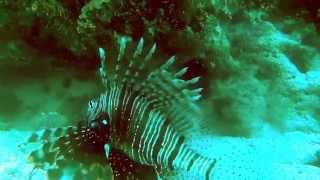 Дайвинг в заповедник Рас Мухаммед (Шарм-Эль-Шейх, Египет) июнь 2014 г. Лучшее место для дайвинга!(Дайв в подводный мир парка Рас Мухаммед июнь 2014 г., 2014-07-01T10:56:11.000Z)