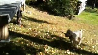 rufus loves to jump Thumbnail