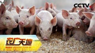 《农广天地》 20190526 诗痴深山发猪财| CCTV农业