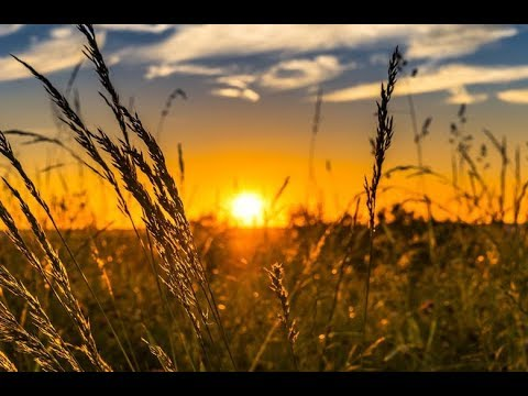 quÉ-es-la-agricultura-de-precisiÓn