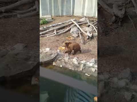 nazar viv: Черкаський зоопарк: ведмедики бавляться