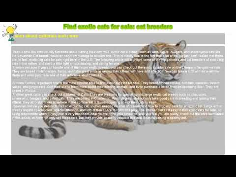 How to : Find exotic cats for sale: cat breeders