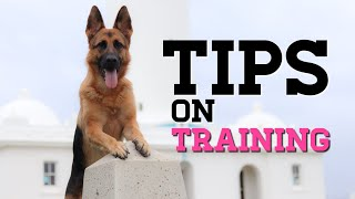 German Shepherd tips and tricks