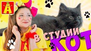 Как правильно ухаживать за котятами. Маленький котёнок у