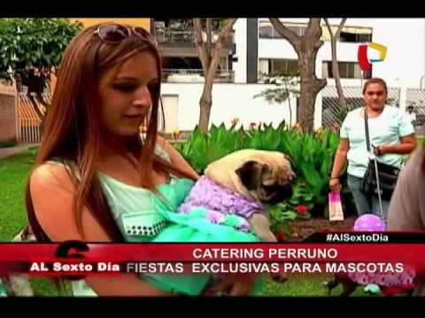 Catering Perruno: La Fiesta Exclusiva Para Mascotas Ya Llegó Al Perú