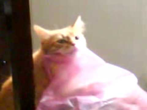 why do cats lick plastic bags best plastic 2018