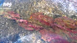 Caño Cristales: The Five Colors River - Colombia