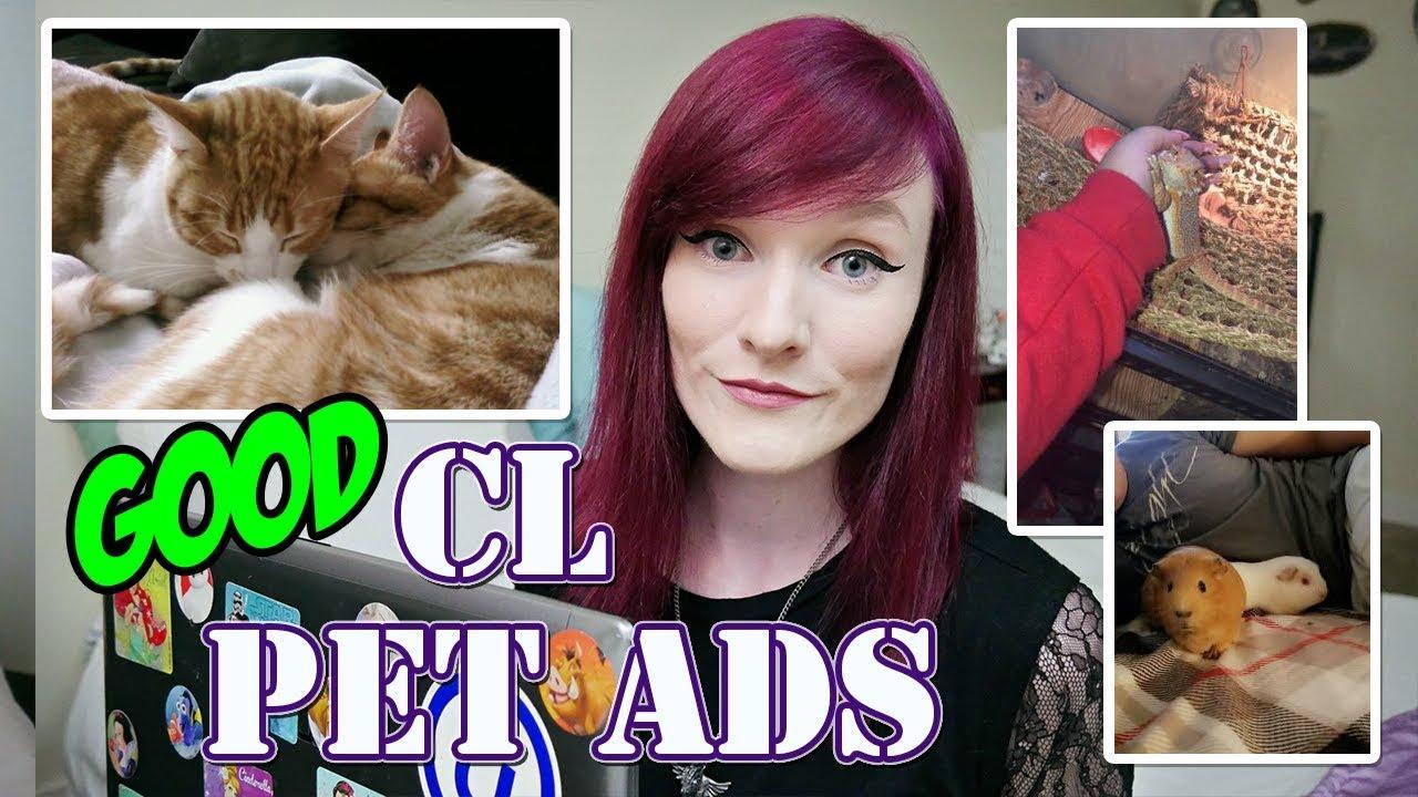 Munchie Talk | Reacting to Good Craigslist Pet Ads!