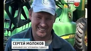 80 центнеров с гектара рекордный урожай озимой пшеницы собрали в Советском районе Алтайского края