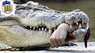 10 Most Devastating Animal Attacks Ever
