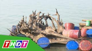Người dân huyện Hồng Ngự vớt được khúc gỗ khủng, khoảng 600 năm tuổi | THDT