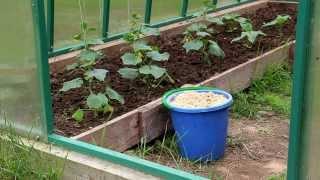 видео Опилки как удобрение в огороде