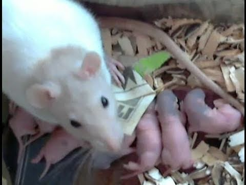 New Born Baby Rats To Cute Youtube