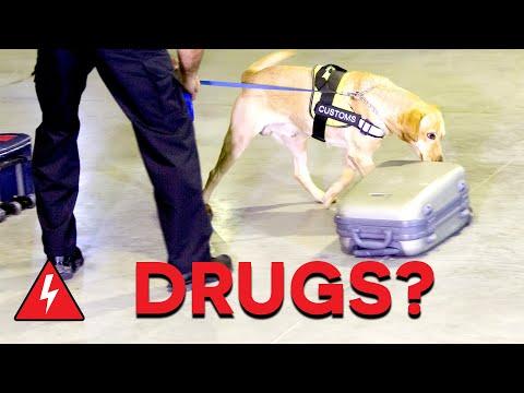 Daring Drug Smugglers Captured At Border! | Customs