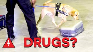Daring Drug Smugglers Captured At Border! | Customs