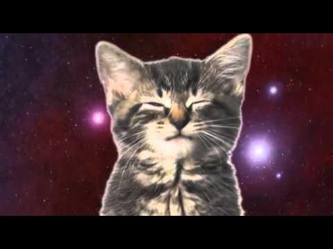 Koty śpiewają
