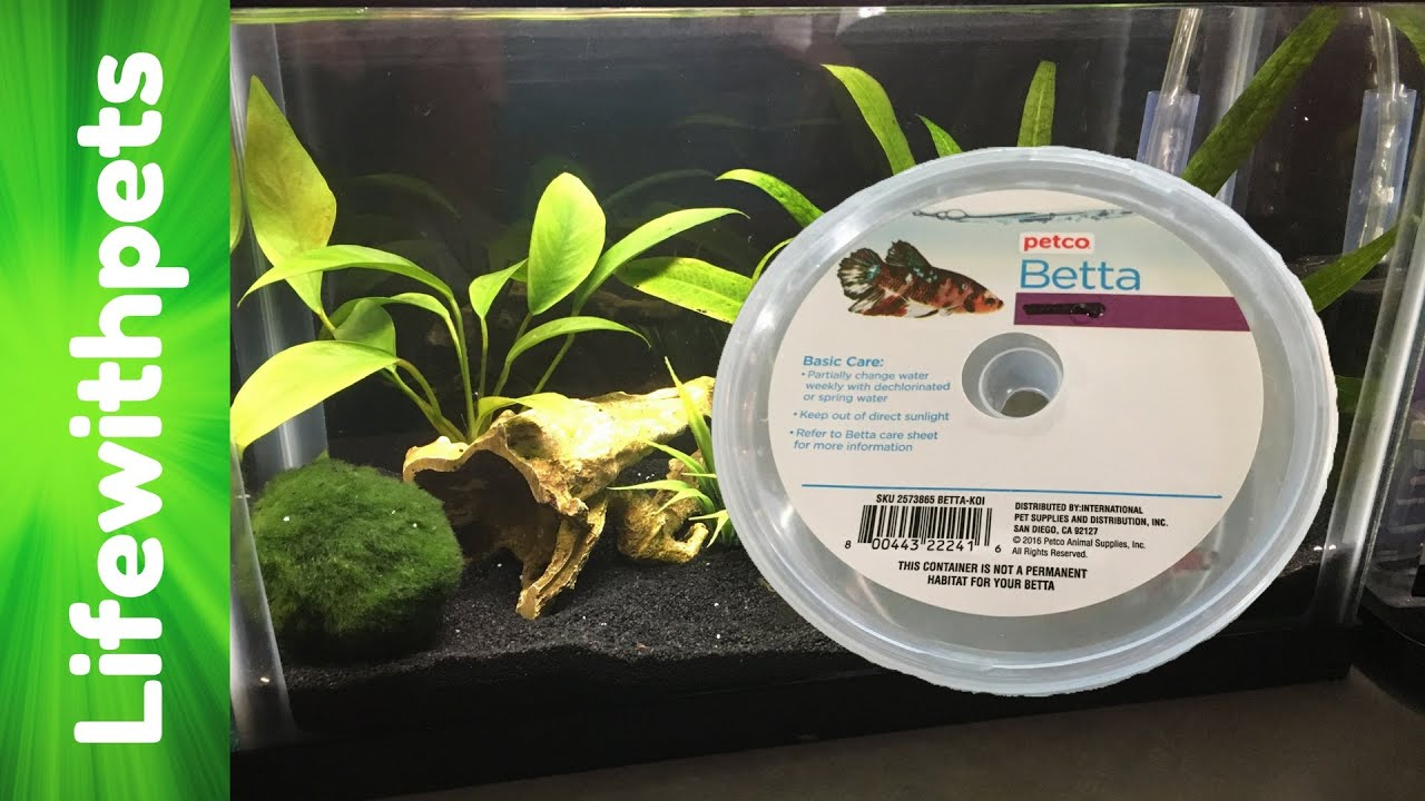 new betta fish and his planted tank set up youtube