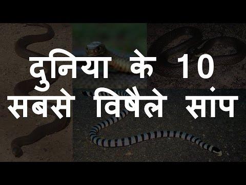 दुनिया के 10 सबसे विषैले सांप | Top 10 Most Venomous Snake Of World | Chotu Nai thumbnail