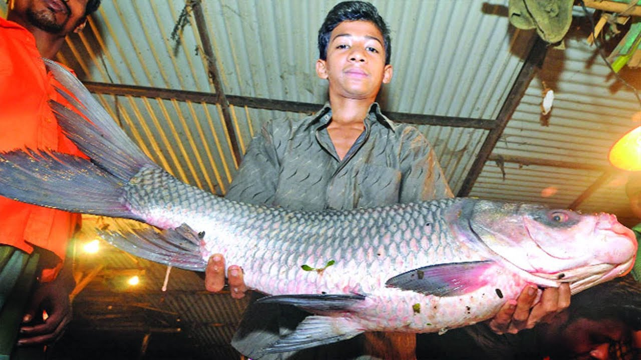 Amazing big catching fish in the pond catch nets for Big fishing net