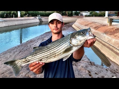 Huge STRIPER Caught From URBAN Arizona CANAL?!