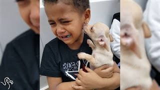 Boy Just Can't Handle How Cute His New Puppy Is