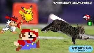 Funny animals - Cats fail compilation - Mario bros - Street Fighter - Ahh real monster