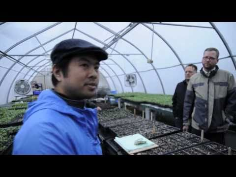 Survive and Thrive TV - Sustainable Urban Farming & Organic Gardening In Detroit